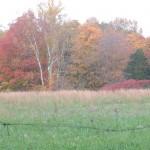 fall-scenery330